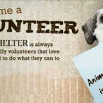 Animal Shelter Holding Shelter Cleanup Event